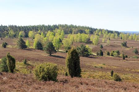 Heathland panorama view from hill Wilseder Berg in Luneburg Heath near Undeloh, Germany Stock Photo