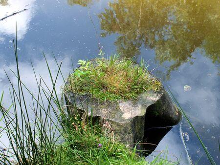 Baumstumpf im Wasser Banco de Imagens