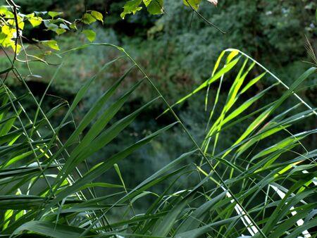 pflanzen: Gras im Blickfeld