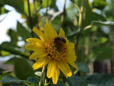mit: Ringelblume mit Wespe