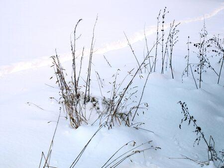 pflanzen: Pflanzen im Schnee Stock Photo