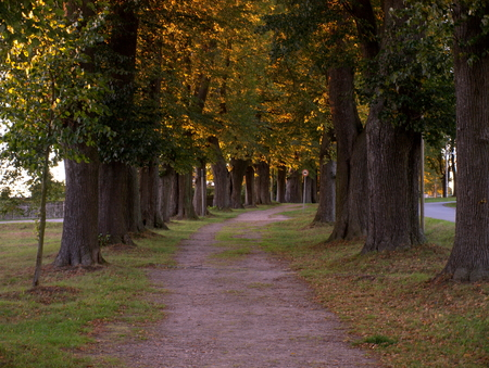 Allee im Herbst Stock Photo - 73042264