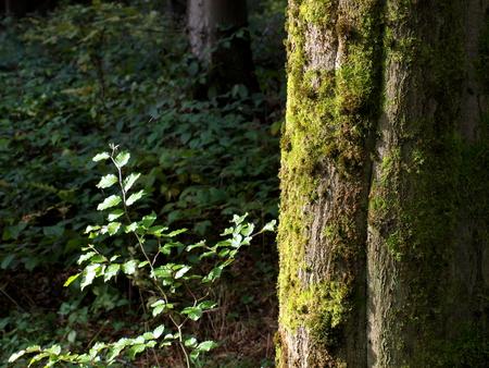 pflanzen: Natur