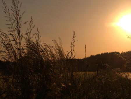 Getreidefeld mit Abendhimmel