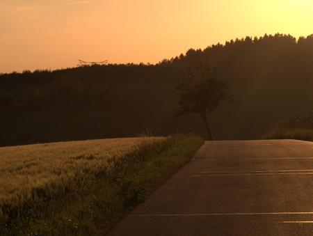 Getreidefeld mit Wald und Strasse am Abend