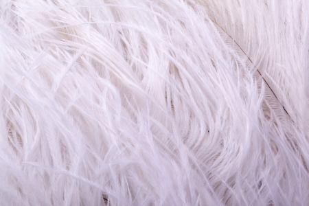 detail of white soft chicken feather boa