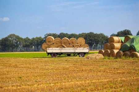 dry golden Hay bales on  farm land photo