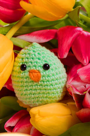 spring decoration chick and tulip flowers for easter holidays photo