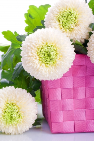 White marigold flower bouquet in a pink box stock photo picture and stock photo white marigold flower bouquet in a pink box mightylinksfo