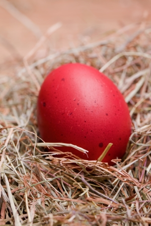 red pastel easter egg lying in a hay nest Stock Photo - 17758807