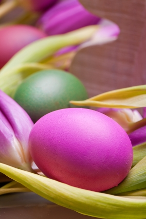 colorful pink pastel easter egg with tulip flower photo