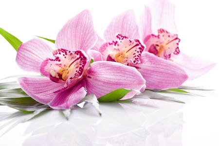 tropical pink orchid plant flower on green leaf
