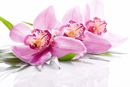 orchidee: tropicale, rosa, orchidea, fiore pianta a foglia verde Archivio Fotografico