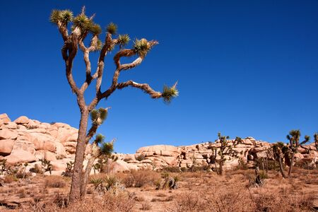 dessert view at Joshua Tree National Park in California
