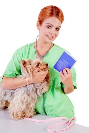 veterinarian with dog and pet passport Stock Photo - 19203597
