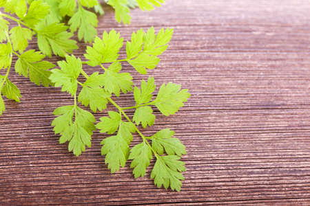 green fresh raw chervil condiment  plant on wooden background photo