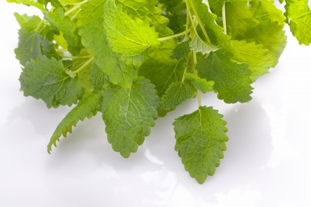 fresh healthy aromatic lemon balm herb photo
