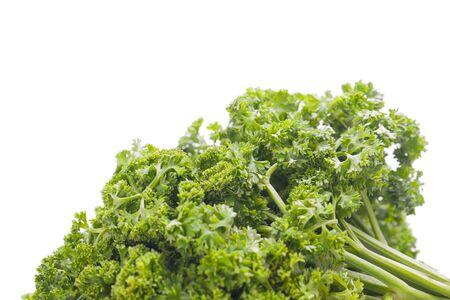 fresh raw parsley herb plant  Stock Photo - 19784048
