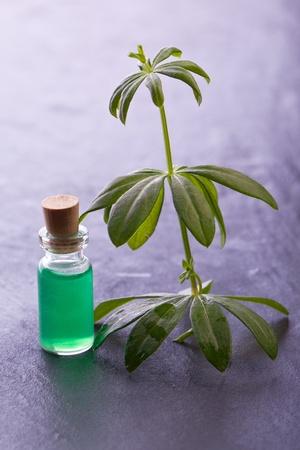 woodruff: woodruff herb  natural aroma  essence