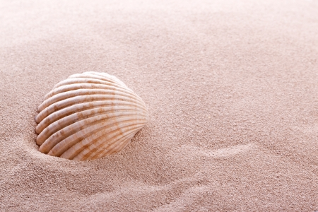 shell lying in sand on a beach