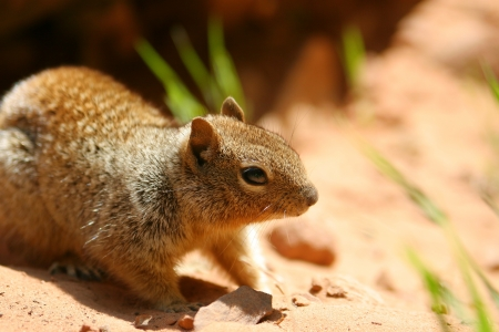cute little brown sqirrel animal Stock Photo