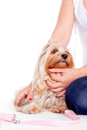 young woman hug a yorkshire terrier puppy photo