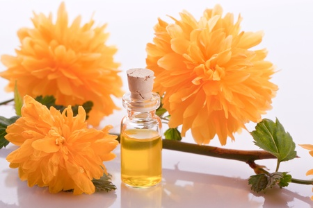 buttercup flower: buttercup flower essence homeopathic  pharmacy