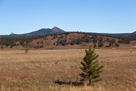petrified fossil: trees and field on florissant national monument colorado Stock Photo