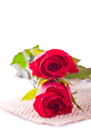 two red rose on withe background Stock Photo