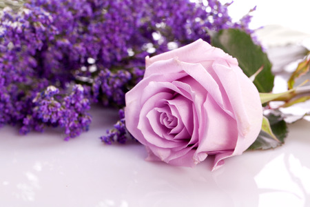 beautiful lavander and pink rose on bright