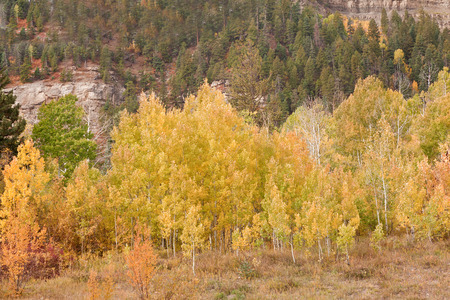 foliage at san juan skyway in colorado Stock Photo