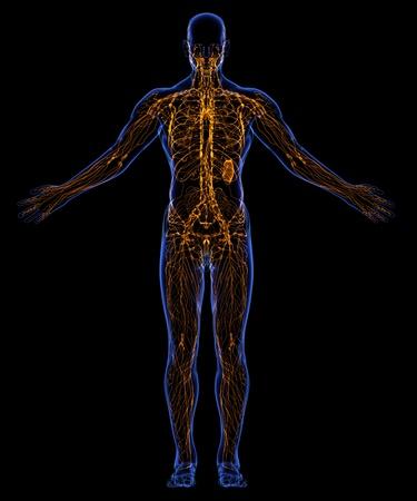 lymph: Human lymphatic system