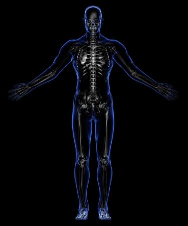 Human skeleton Stock Photo - 18292527
