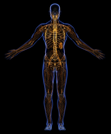 lymphatic: Human lymphatic system