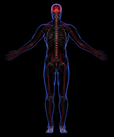 medical scans: Human skeleton and nervous system Stock Photo