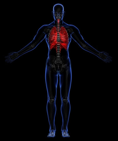 Human skeleton and respiratory system Stock Photo