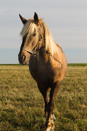 non urban 1: Young horse grazing in a pasture Stock Photo