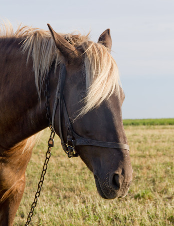 Young horse grazing in a pasture Banco de Imagens