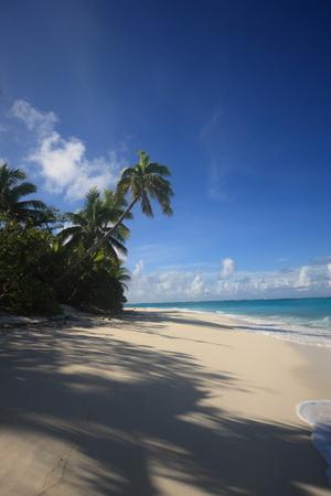 palm lined: Fiji-Islands, Ozeania, Australasian