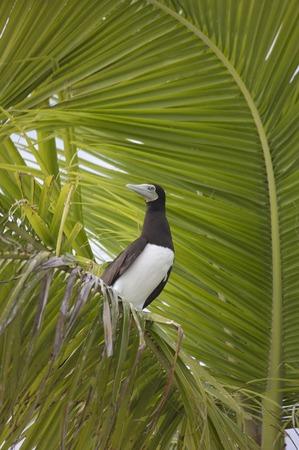 palm lined: Island Nanuku Levu, Fiji Islands, Fiji, Sdsee, Oceania