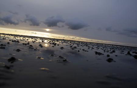 schleswig holstein: Wadden Sea Schleswig Holstein Germany