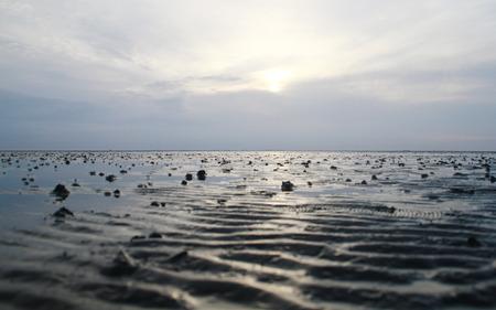 muster: Wattenmeer, Schleswig-Holstein, Deutschland