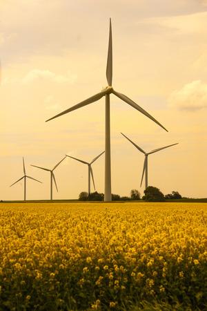 Windräder zur Gewinnung Alternativer Energien auf einem Rapsfeld Archivio Fotografico - 40934475