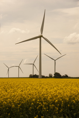 alternative energy sources: Windrder for obtaining alternative energy sources on a rape field