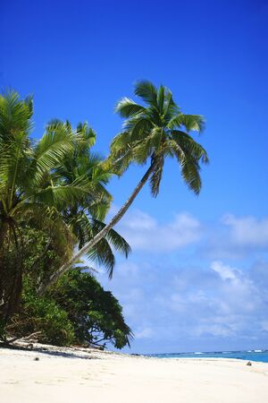 Tropical Island with a paradise beach and palm trees, Fiji Islands