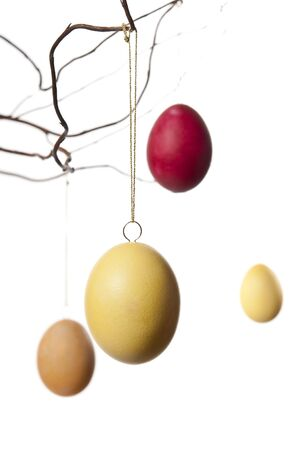 Colorful easter eggs hanging in a branch