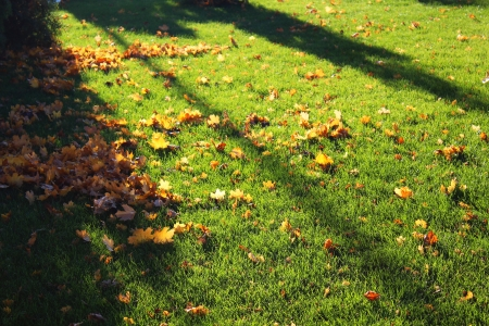 Green lawn and autumn yellow leaves by sunset
