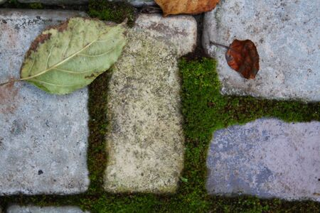 Moss around pavement (cobbles) photo