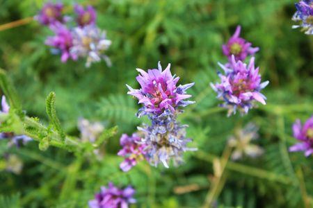 Purple tropic flowers