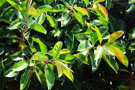 녹색 황색 열대 잎